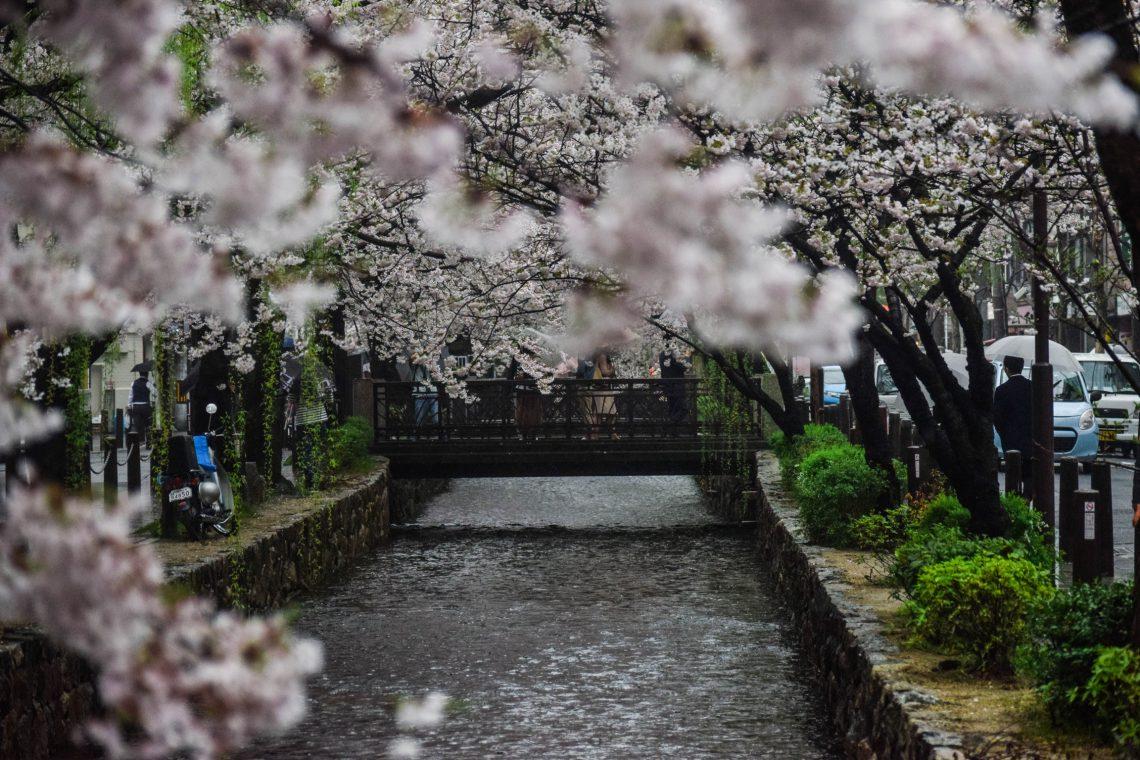 [Travel] Must See Sakura Spots in Tokyo Area