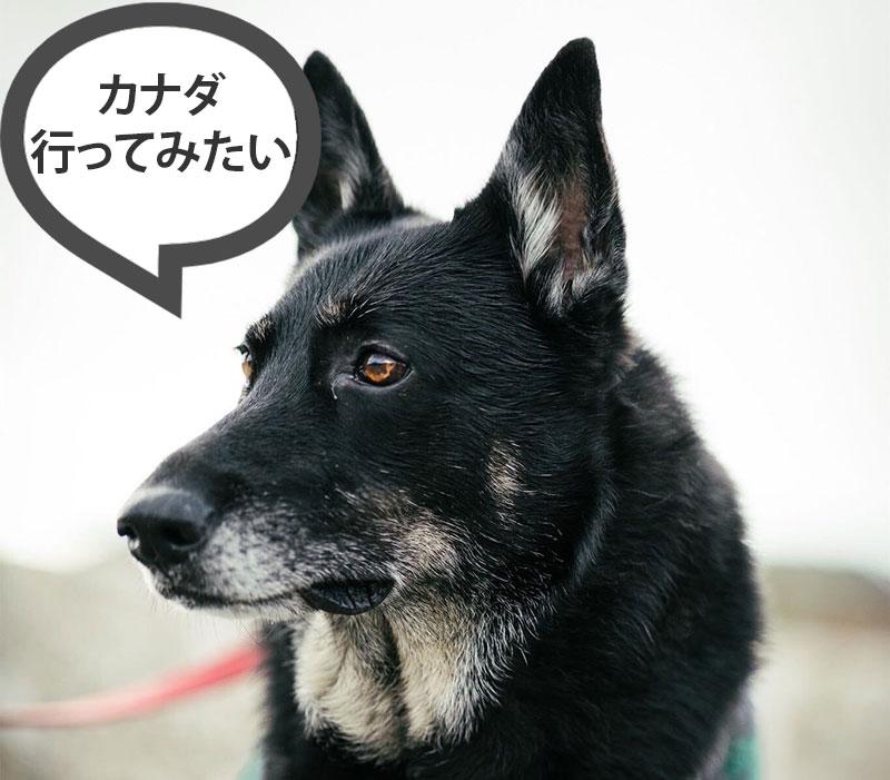Dog Mimi comment